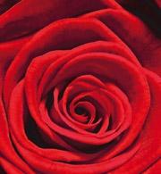 Rosenblüten Etikett