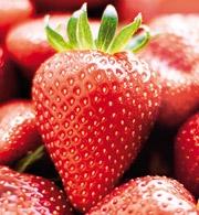 Perkeo Erdbeer Mood